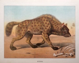 Antique 1884 HYENA Wild Animals  Chromolithograph Bookplate Print 1890s Nursery Home Decor