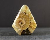 AAA Free form  Ammonite Cabochon Hand Cut, Heart shape cabochon, Jewelry making supplies S6749