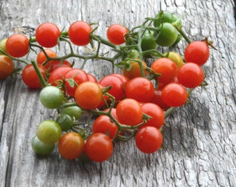 Cherry Tomato Seed Sweet Pea Currant Tomato Seed Organic Seeds Fresh From This Year's Crop Heirloom Tomatoes