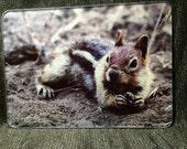 Glass Cutting Board - Golden Mantled Ground Squirrel -  7.75in x 10.75in