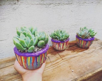 Limited Pride Month edition succulent arrangement set of 3