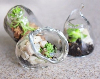 75 Miniature terrariums Blown Glass wedding favors Succulents