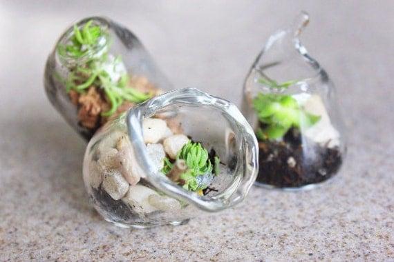 75 Miniature terrariums Blown Glass wedding favors Succulents
