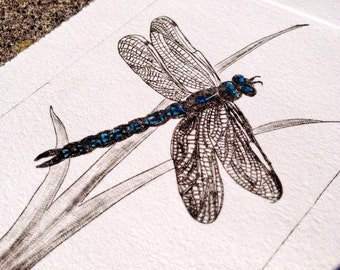 Dragonfly Days - a limited edition drypoint etching
