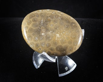 Polished Petoskey Stone (Medium)