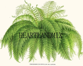 Antique Botanical Fern Downloadable Wall Art Graphic Image