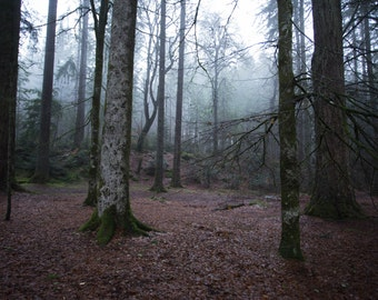 Mists of the Hermitage - Scotland, Fine art photography, nature photography, mist, woods, forest, magical, eerie, winter, cold