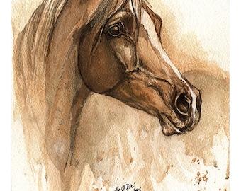 Ala el Din - original watercolour painting of an arabian horse