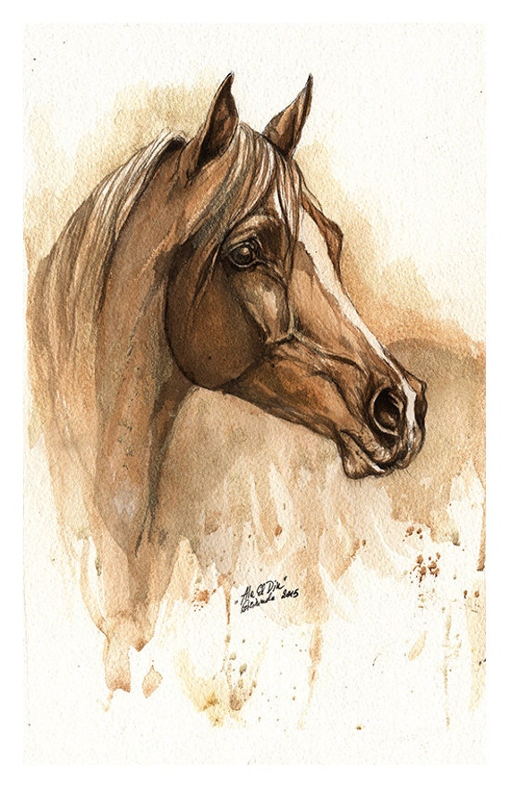 Ala el Din - original watercolour painting of an arabian horse