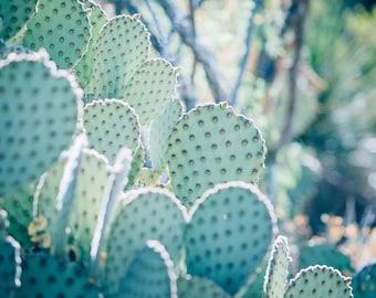 cactus photography, cactus print, southwest decor, texas decor, western print, southwestern print, texas art, large wall art, mint, cool