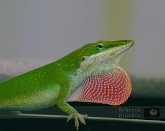 Photo of Lizard Digital Download