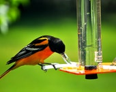 Oriole Feeder OR-1 by Peter's Feeders: This oriole feeder attracts birds like a magnet.
