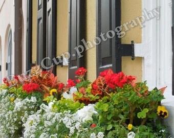 Photography, Charleston Photography, Charleston Flower Boxes