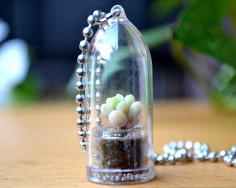 Baby Donkey Tail Terrarium Necklace / Terrarium Jewelry / Plant Necklace / Succulent Necklace / Girlfriend Gift