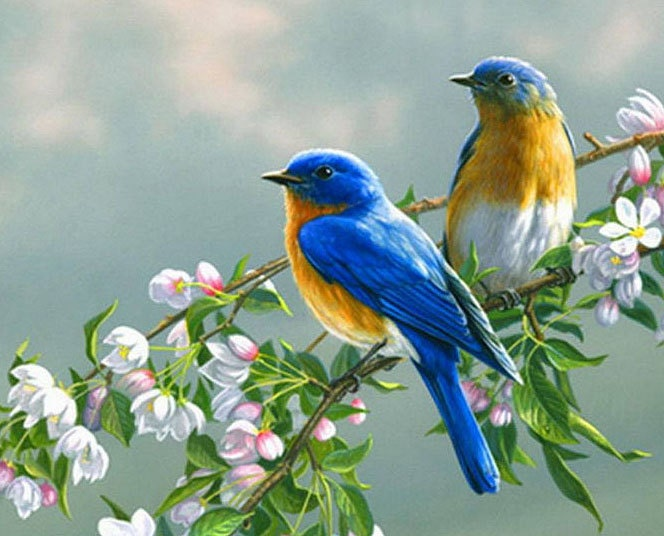 Two Birds On A Branch Www Pixshark Com Images