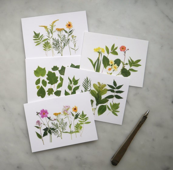 Wildflowers and leaves card set ~ note cards ~stationery set ~ goldenrod ~ anemone ~ tansy ~ primrose