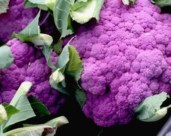 Broccoli seeds,red broccoli, violet queen seeds, 404,non gmo red broccoli seeds, heirloom broccoli, greek broccoli, purple broccoli seeds