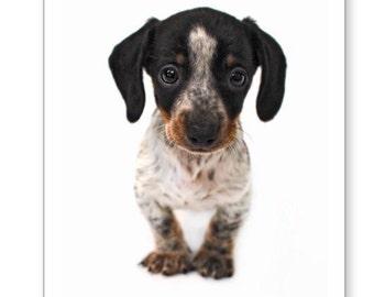 Dachshund Dog Note Cards