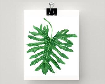 LARGE - Philodendron Xanadu botanical print from original watercolour artwork