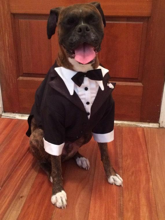 Large Dog Tuxedo