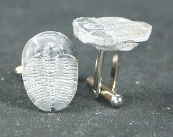 Trilobite Fossil Cufflinks No. 13  Free Cufflink Box By Cufflinked