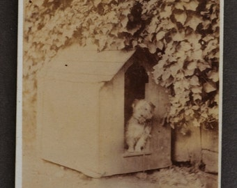 ON SALE Antique CDV Photograph ~ Sweet Terrier In Dog House