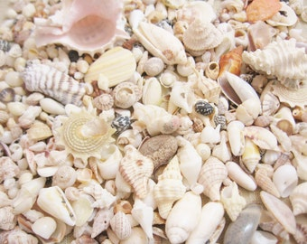 Over One Pound of Seashells for Crafting or Home Decor
