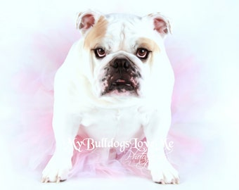Card #74 / Mother's Day ~ English Bulldog Mother's Day Card