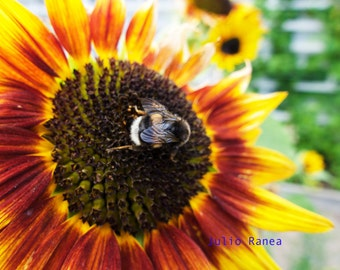 Photo print: The bumblebee. flower photography. Blurred photography. Living room art.