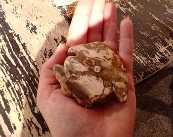 Fossilized Petrified Wood ~ Sliced Petrified Wood