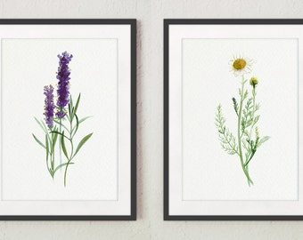 Camomile Lavender 2 Art Prints Green Botanical Wall Decor, Kitchen Decoration Herb Watercolor Painting Herbs set Modern Kitchen Illustration