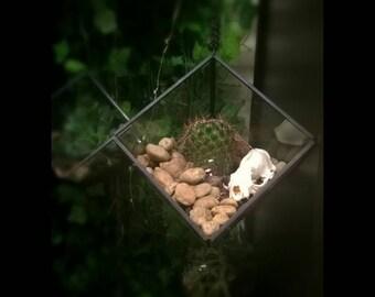 Mink & Cactus Terrarium (Large)