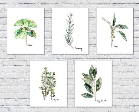 Set stampa di erbe aromatiche di 5 8 x 10 stampe acquerello for Salvia da colorare