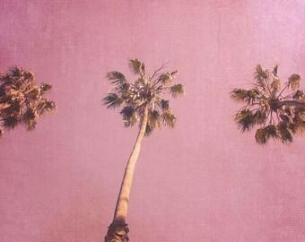 California Photography - Fine Art Photography - Beach Photography - California Art Print - Beach Art Print - California Palms