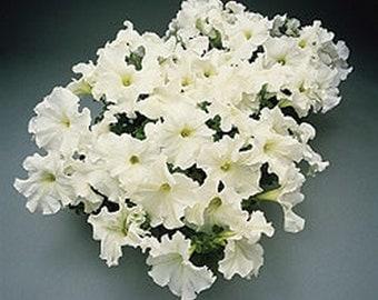 Petunia Supercascade White * 25 Seeds