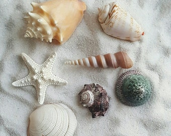 Assorted Natural Shells