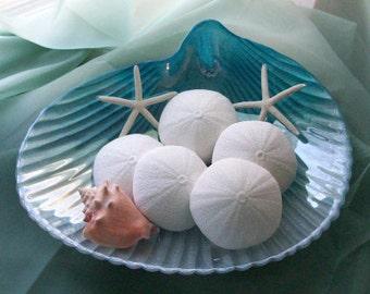 Coast of Maine Sea Urchin Sea Salt Soap
