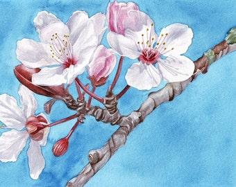 Cherry Blossom Original Watercolor Art