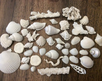 White Sea Shell & Coral Assortment (45 pieces)