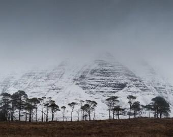Torridon trees, Northwest highlands, Scotland