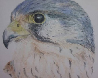 Kestrel Portrait Painting
