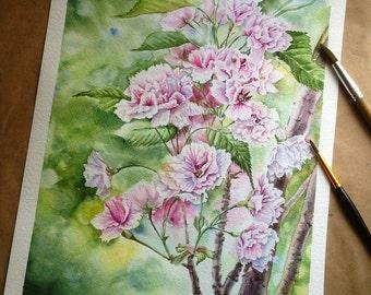 Blossom of almond.