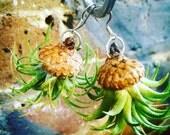 Airplant Acorn Earrings, nature, unique, living, air plant, tillandsia, succulent, dangle, fun, statement