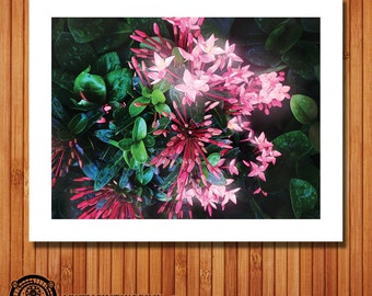 Bouvardia Flowers - 14x11 - Psychedelic - Giclee Art Print