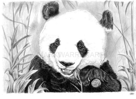 panda kunstdruck hand gezeichnete tier bleistift zeichnung. Black Bedroom Furniture Sets. Home Design Ideas