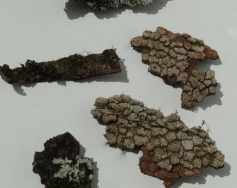 Lot of 5 Pieces Mossy and Dried Tree Bark, Florist's Supply, Terrarium Decoration