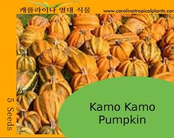 Kamo Kamo Pumpkin - 5 Seeds