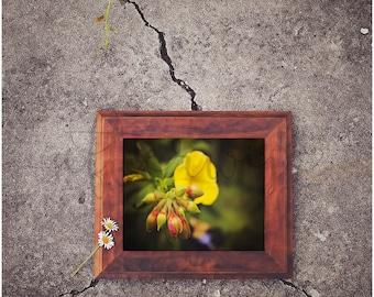 Flower Fine Art Photography. Flower Print. Flower Art. Floral Wall Art. Flower Photo. Flower Photography. Nature Print.