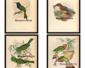 Set of four Bird Prints.  Plate 37,38,39, and 40.
