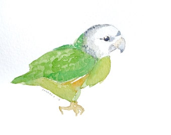 "Baby Parakeet in Watercolor 6x6"" [Original Painting]"